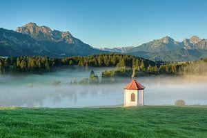 A foggy summer morning in the Allgäu