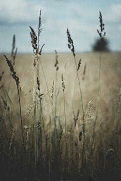 Prairie d'été avec de l'herbe