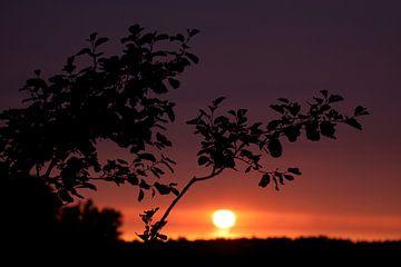Zonsondergang in de polder van Dennis Claessens