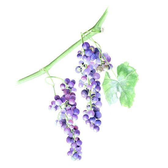 Blauwe Druiven van Bianca Tekent