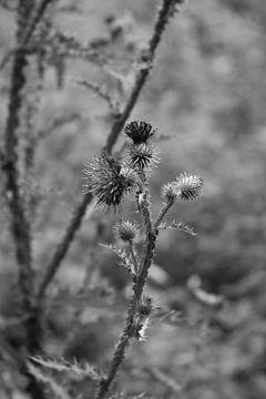 Wilde bloem in zwart wit van Summer van Beek