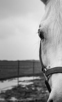 paard van Jehee Fotografie