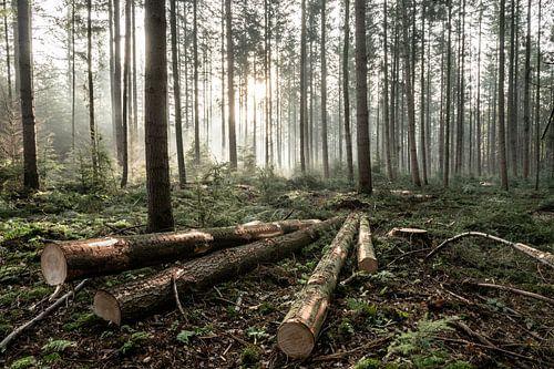 De 4 omgehakte bomen