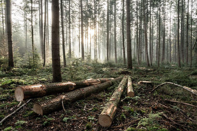 De 4 omgehakte bomen van Albert Lamme