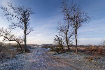 koude morgen van Rene van Rijswijk