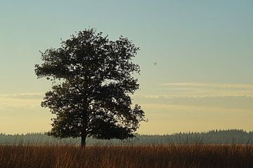 Luchtballon over Doldersumseveld van Elfriede de Jonge Boeree