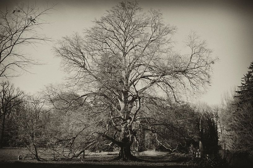 Oude boom van Photography by Karim
