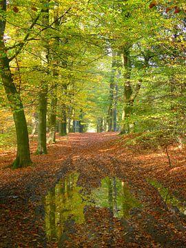 Reflectie in het bos van Corinne Welp