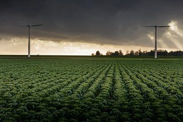 Spruiten en windmolens in Flevolands landschap van Rene  den Engelsman