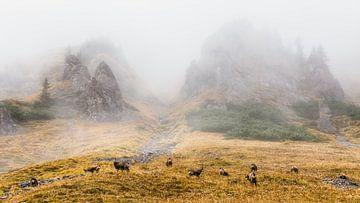 Gämse im Nebel von Coen Weesjes