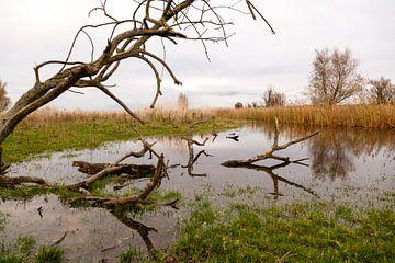 waterpartij met riet en bomen in de oostvaardersplassen van Bernadet Gribnau