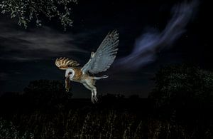 Nightly ghost von Mario Cea Sanchez