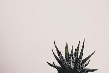Sukkulenten vor einem weißen Hintergrund von Marjolijn Maljaars