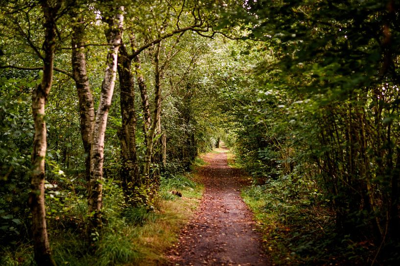door het bos van claes touber