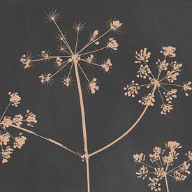 Berenklauw, botanische print in antraciet van Joske Kempink