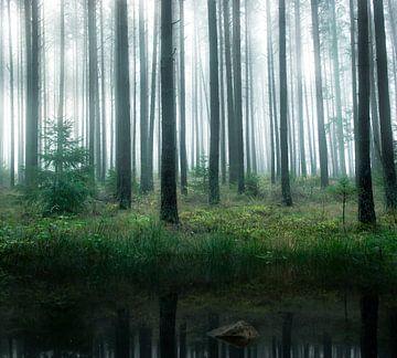 Meer in het bos, Christian Lindsten van 1x