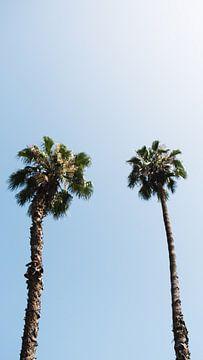 Palmiers sur