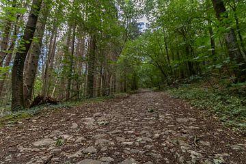 Lange Straße mit Kopfsteinpflaster im Wald von Paul Veen