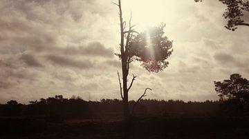 Eenzame boom op het wekeromse zand van Wilbert Van Veldhuizen