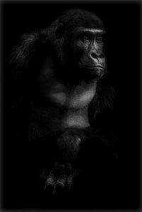 De puber  van Ron Meijer Photo-Art