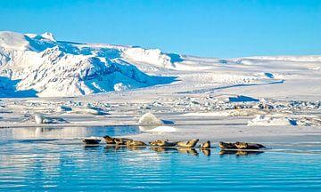 IJsland  Jökulsárlón Meer meer zeehonden van Marjolein van Middelkoop