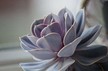 pastel plant in het avondlicht von Sagolik Photography