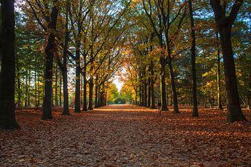 Mastbos in herfstkleuren von Tom Hengst