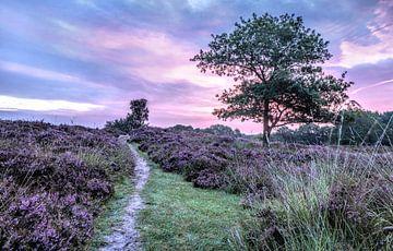 Ein lila Sonnenaufgang auf den Gasterse Dünen Drenthe Niederlande von R Smallenbroek