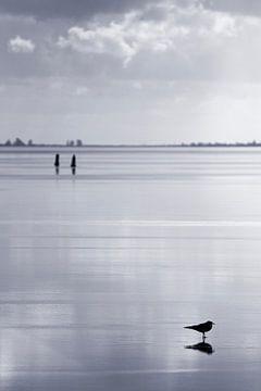 Zugefrorenes IJsselmeer sur Rob van der Teen