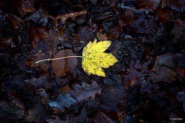 Autumn leaf van Arjan Boer