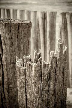 Paalhoofden close-up aan Zeeuws strand in zwart-wit van Michel Seelen