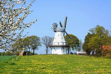 Windmill in Spring van Gisela Scheffbuch