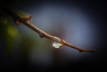 """,,Nach dem Regen"""" von Ronnie Reul"""