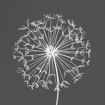 Löwenzahn, Illustration, Skizze, schwarz-weiß von Color Square