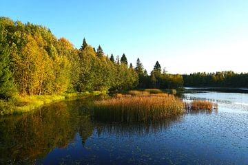 An einem See in Schweden von Thomas Zacharias