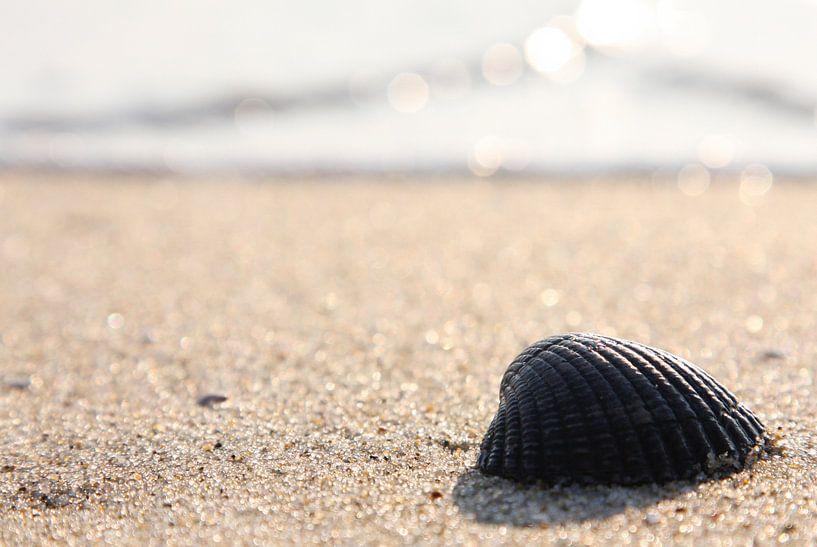 Kokkel op strand van Texel van Martijn Smit