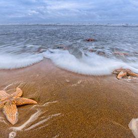 Star Beach von Richard Guijt