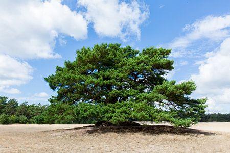 Baum auf dem Sand .