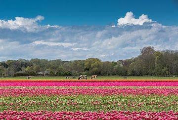Landbouw in Nederland van Peter Leenen