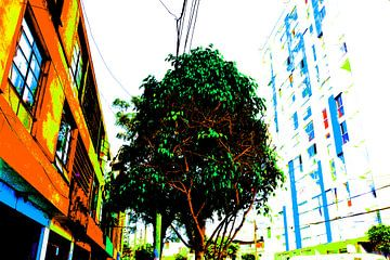 boom aan de General Varela von Gerrit Neuteboom