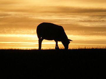 Schaap op de dijk.  Sheep on dike van Joke Schippers
