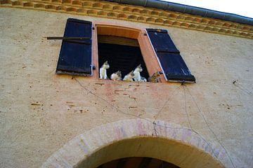 Katten in een schuur bij een chateau midi-pyrénées, Frankrijk van Atelier Liesjes