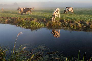 Kühe im Nebel von John Verbruggen