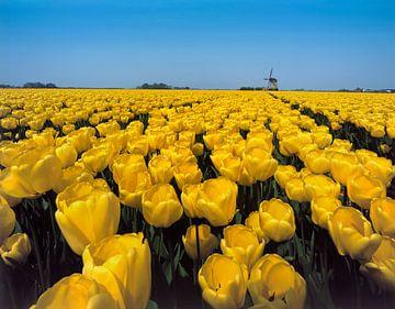 Gele tulpen met molen 2 von Rene van der Meer