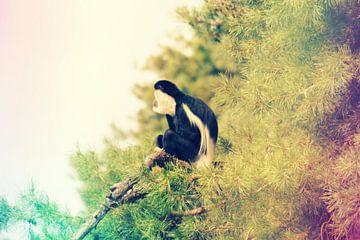 aap op tak von Thamara Janssen