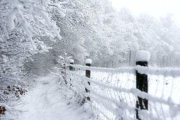 bospaadje insneeuw van