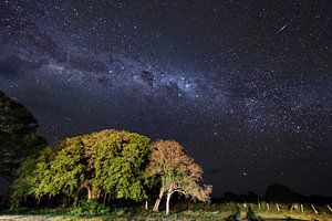Melkweg Pantanal