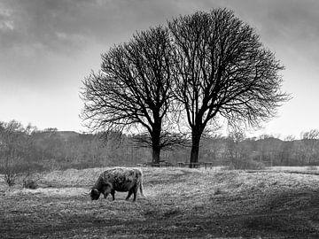 Highlander onder bomen von Dirk van der Plas