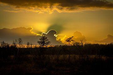 Sumpf-Horizont Sonnenlicht von Frank Ketelaar