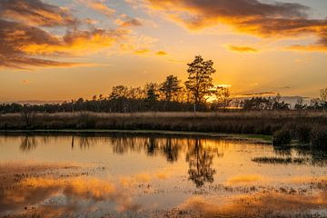 Goldener Sonnenuntergang von Marian Schepens